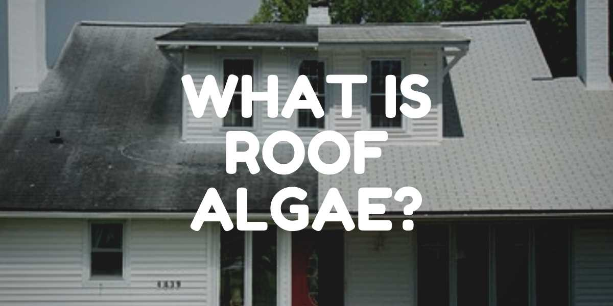 what is roof algae before and after